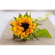 Sunflower Bunch of  10 Stems