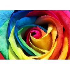 Rainbow Rose 40 cm $4.99 Per Stems