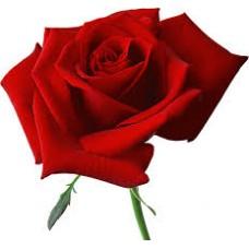 40 cm Red Roses $1.95 per stem