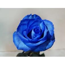 Blue Roses - 40 cm