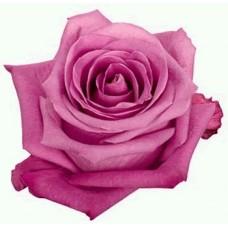 40 cm Rose Soulmate $1.95 per stem
