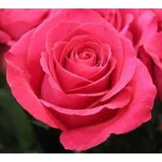 40 cm Rose Pink Floyd