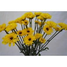 Chrysanthemum Spray Daisy Viking Yellow