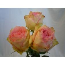40 cm Rose Esperance