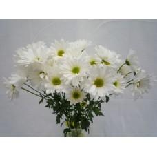 Chrysanthemum Spray Daisy White
