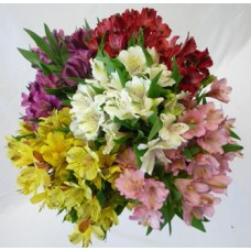 Alstroemeria Assorted
