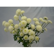 Chrysanthemum Spray Button White – 3 Bunches (Each Bunch $12.99)