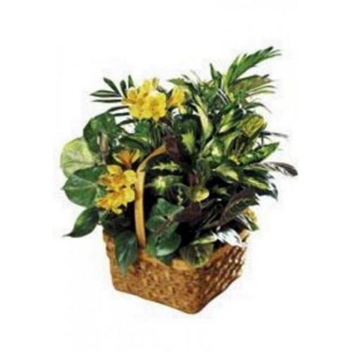 A Bit of Sunshine Blooming Basket