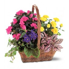 Spring Tropical Plants - Baskets