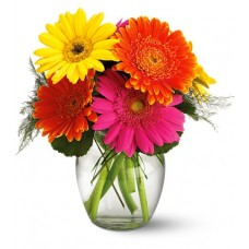 Birthday Gerbera Daisy