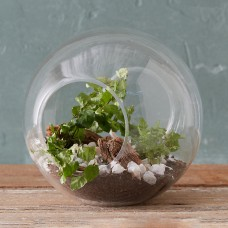 Crosswinds Vase with Plants