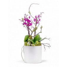 Interior Orchids Plants
