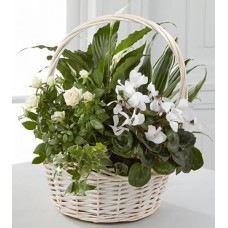 Peaceful Plants Basket