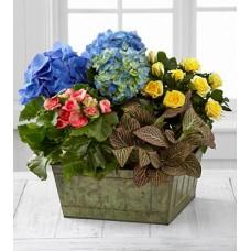 Dish Garden - By Florist