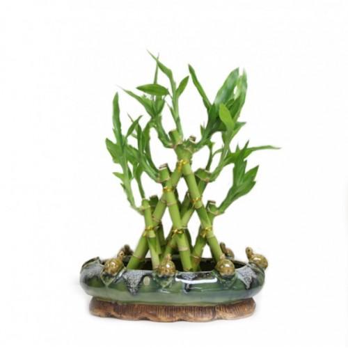 3-Layer Pyramid Bamboo