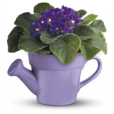 Birthday Gift - African Violet in Watering Can