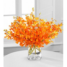 Amber Awakenings Mokara Orchid Bouquet - 10 Stems - VASE INCLUDED