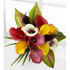 Captured Color Calla Lily Bouquet - 12 stems, No Vase