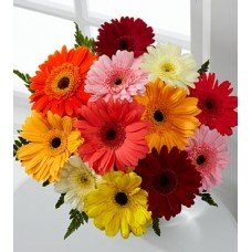 Colorful World Gerbera Daisy Bouquet - 12 Stems, No Vase