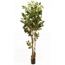 6' Classic Ficus Tree - Artificial