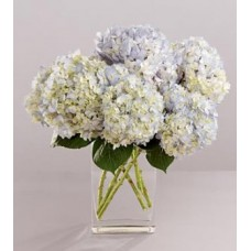 Joyful Hydrangea Arrangement