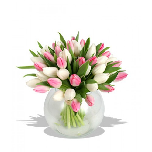 20 Stems Cotton Candy Tulips with FREE Vase