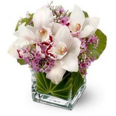 Lovely Orchids - Flowers