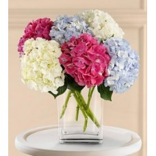 Mixed Hydrangeas Flowers