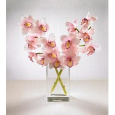 Pink Cymbidium Orchids with FREE Vase