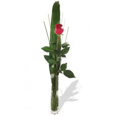 Single Rose with FREE Vase