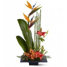 Birds of Paradise Arrangements