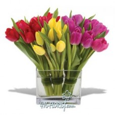 Tulips Flowers with Free Square Vase