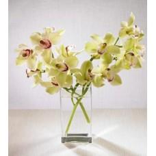 Cymbidium Orchids with FREE Vase