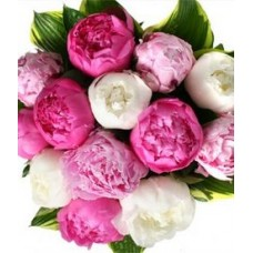 Bouquet of Mix Color Peonies