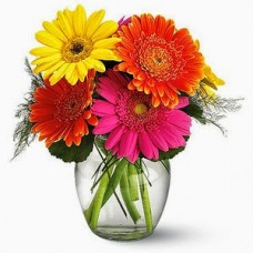 Fiesta Gerbera Flowers