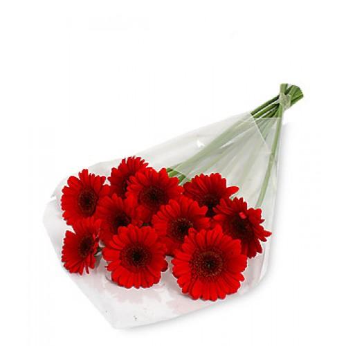 10 Stem Red Gerbera Daisy Bouquet
