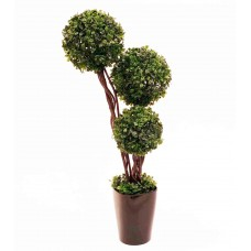 "23"" Leucondendron Topiary - Artificial"
