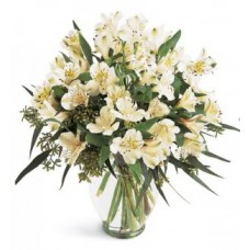 Peruvian Lilies Flowers