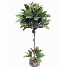 "22"" Shikiba Topiary"