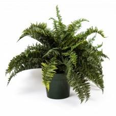 """29"""" Ruffle Fern Silk Plant"""